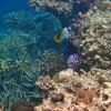 Great Barrier Reef – ein Naturwunder