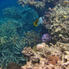 Great Barrier Reef – ein Naturwunder